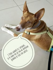 Un chien attaché n'est pas dans la configuration optimale pour un contact physique.