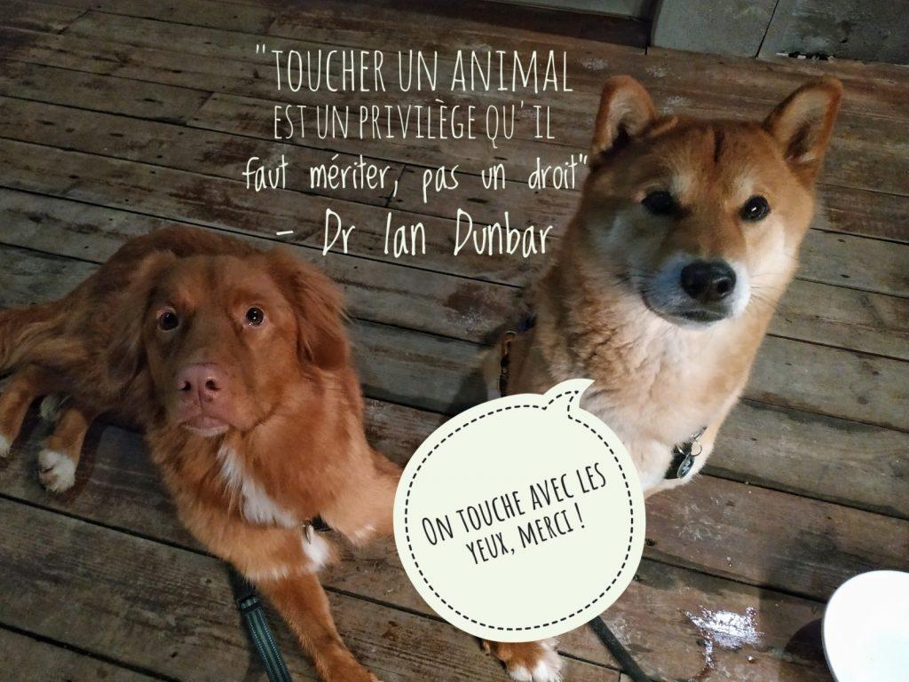 Et si on arrêtait de toucher les chiens que l'on croise ?